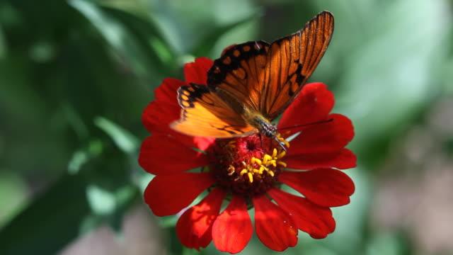 Schmetterling - 07