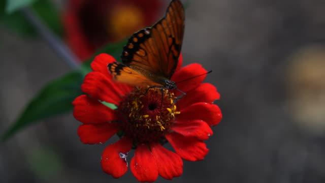 Schmetterling - 08