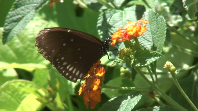 butterfly 2 - hd 1080/60i - butterfly garden stock videos & royalty-free footage