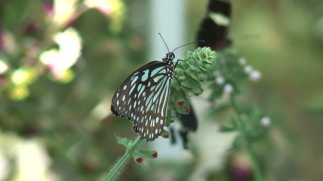vídeos de stock e filmes b-roll de borboleta/6-hd 1080 60i - grupo médio de animais