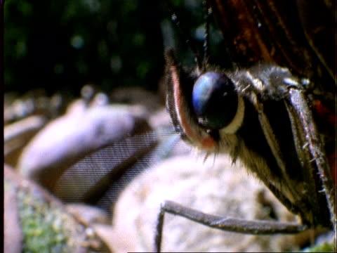 butterfly, bcu butterfly feeding on dipteryx fruit, panama - 動物の色点の映像素材/bロール