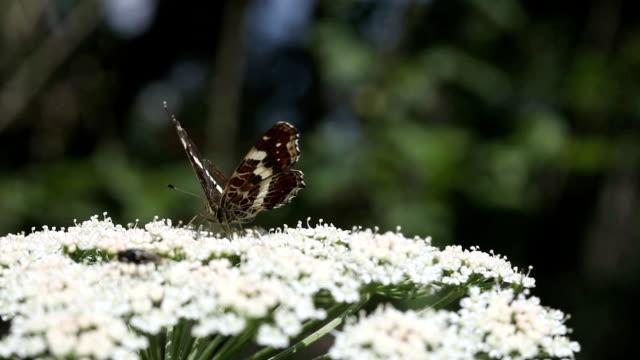 Schmetterling-Nahaufnahme