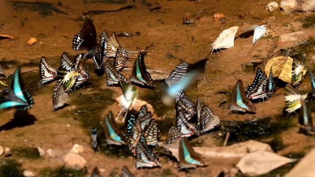 Schmetterling Nahaufnahme. HD