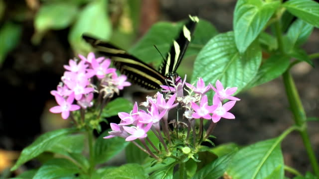 stockvideo's en b-roll-footage met butterfly closeup - vachtpatroon