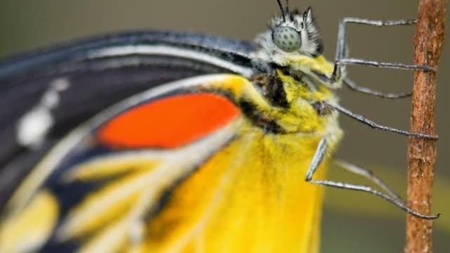 蝶のクローズ アップ