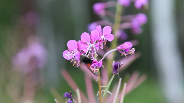 stockvideo's en b-roll-footage met vlinder verzamelt nectar - voelspriet
