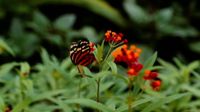 vidéos et rushes de danse avec fleurs et papillons - coup de foudre
