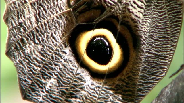 a butterfly feeds on vegetation. - gliedmaßen körperteile stock-videos und b-roll-filmmaterial