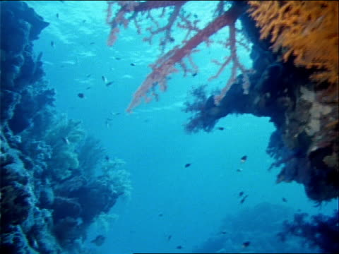 butterfly fish swim around a colorful coral reef. - red sea stock videos & royalty-free footage