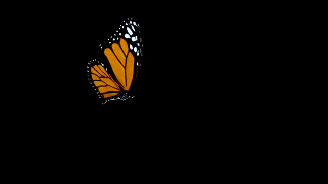 butterfly flies into shot and lands. - butterfly stock videos & royalty-free footage