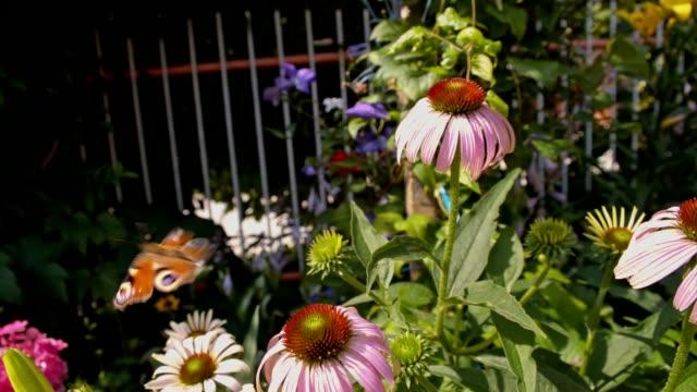 slo mo バタフライフライングオフの花 - 花壇点の映像素材/bロール
