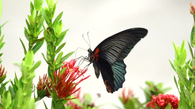 butterfly flying on a flower slow motion - butterfly stock videos & royalty-free footage
