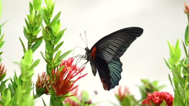 vídeos de stock e filmes b-roll de butterfly flying on a flower slow motion - borboleta