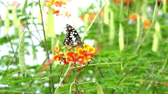 蝶が飛んでる赤い花をキャッチするスローモーション蝶が飛んでいく。 - 昆虫点の映像素材/bロール