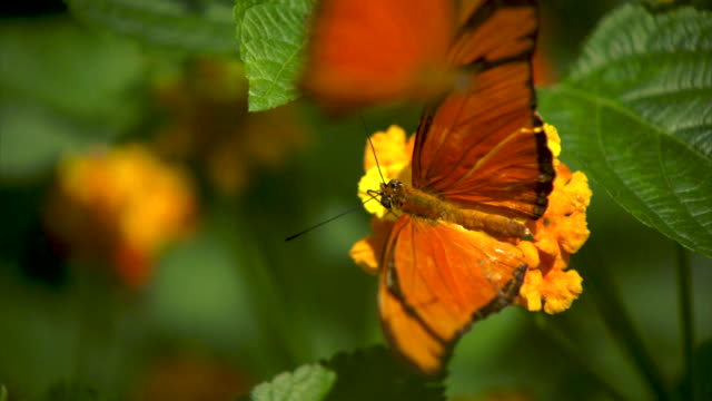 Butterfly flying slow motion on flower