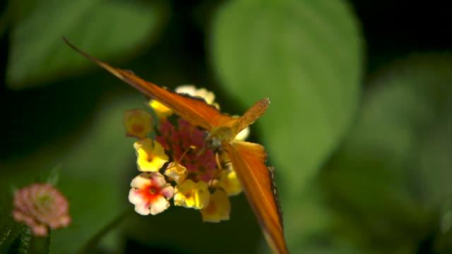 butterfly flying slow motion on flower - bellezza naturale video stock e b–roll