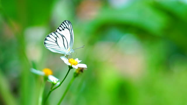 Butterfly flying slow motion on natural green background.