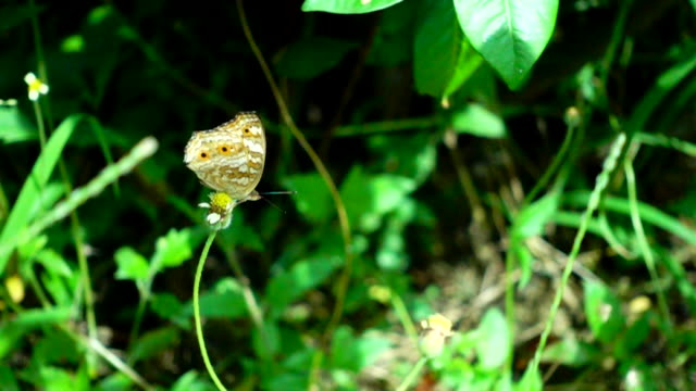 vídeos de stock e filmes b-roll de butterfly flying slow motion - parte do corpo animal