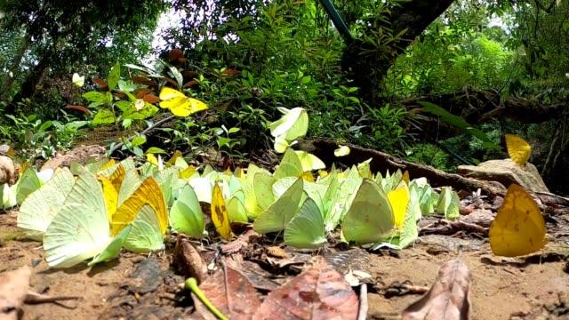 vídeos y material grabado en eventos de stock de mariposa volando cámara lenta - pistilo