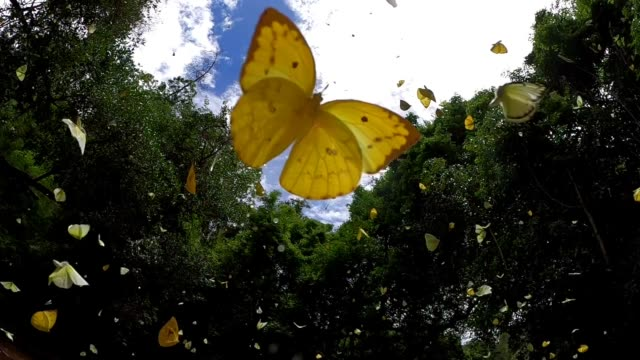 butterfly flying slow motion - wildflower stock videos & royalty-free footage