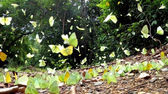 vidéos et rushes de papillon volant le ralenti - éthéré
