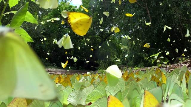 vídeos y material grabado en eventos de stock de mariposa volando cámara lenta - televisión de ultra alta definición