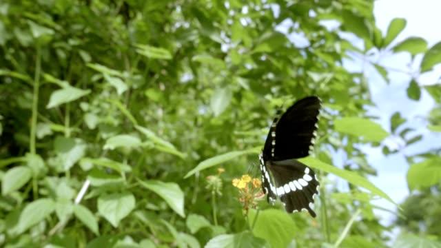 Schmetterling fliegen Zeitlupe