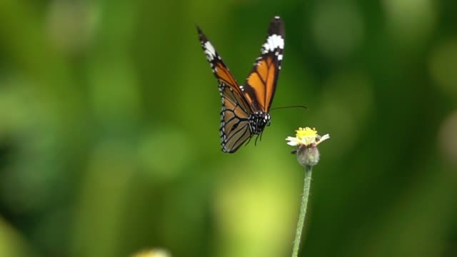 butterfly flying slow motion - gardening stock videos & royalty-free footage