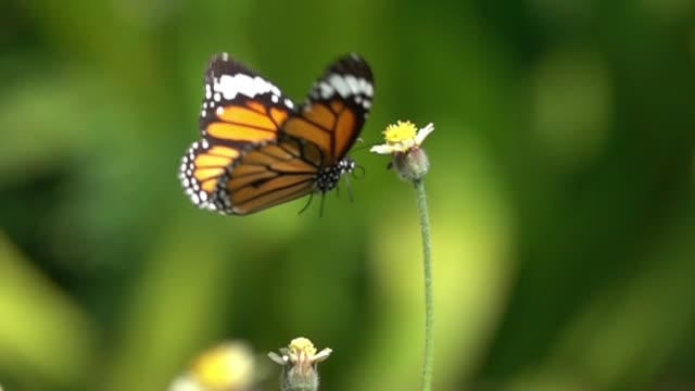 butterfly flying slow motion - farfalla video stock e b–roll