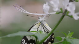Butterfly hanging in slow-motion