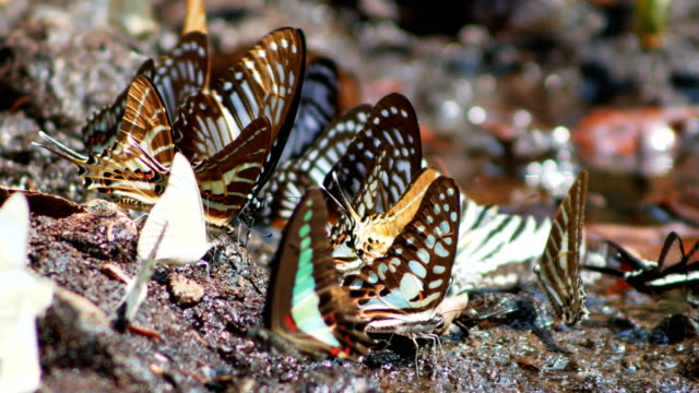 butterfly herd on the ground at khao yai national park Thailand