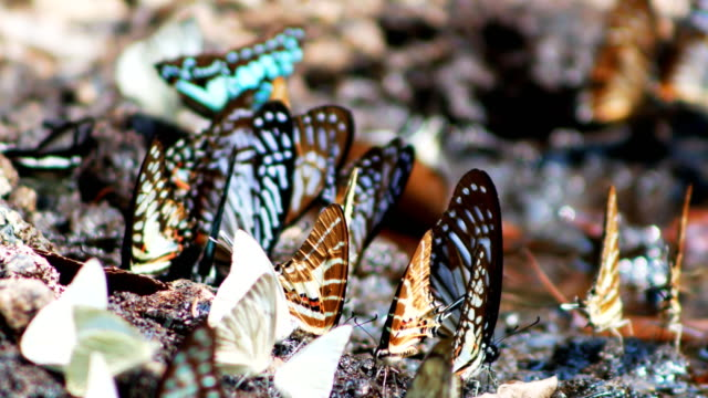 butterfly herd - swarm of insects stock videos & royalty-free footage