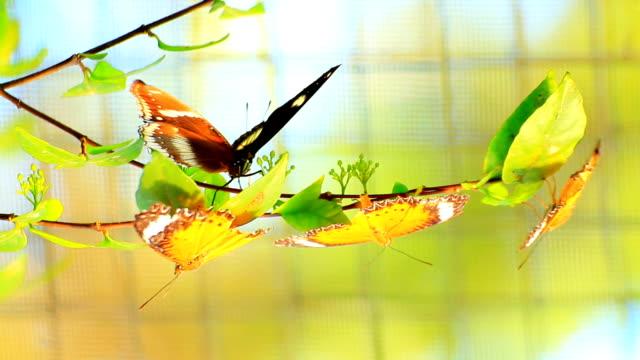 vídeos de stock, filmes e b-roll de borboleta na natureza - lepidóptero