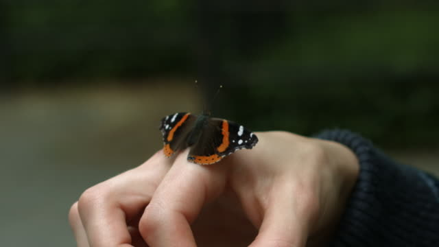 a butterfly in slow motion on a individuals hand outside in new york city - catapult stock videos & royalty-free footage