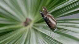 Butterfly in slow-motion