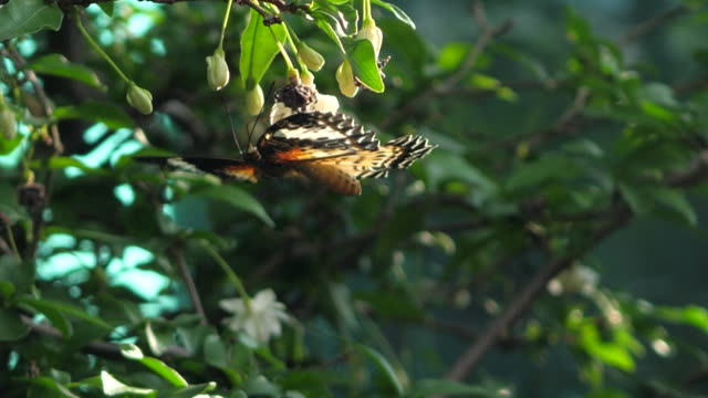 butterfly in the evening light - sri lanka stock videos and b-roll footage