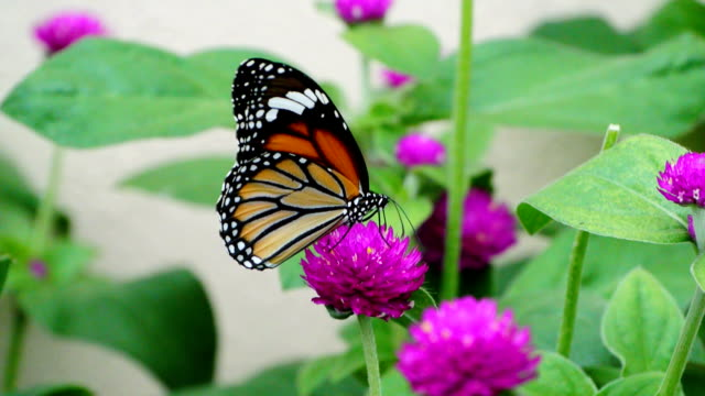 butterfly in the garden - butterfly garden stock videos & royalty-free footage