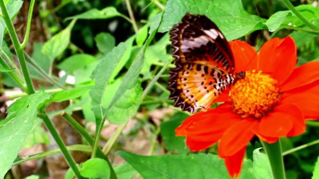 stockvideo's en b-roll-footage met vlinder in de tuin - vachtpatroon