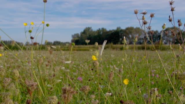 vídeos de stock, filmes e b-roll de slo mo-in the grass - raw footage