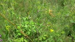 Butterfly in the Meadow_1