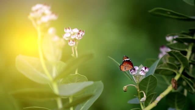Butterfly in de natuur