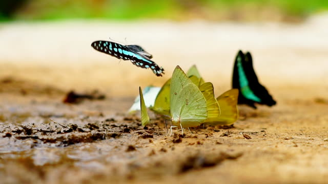 Butterfly in the rain forest.Slow motion.