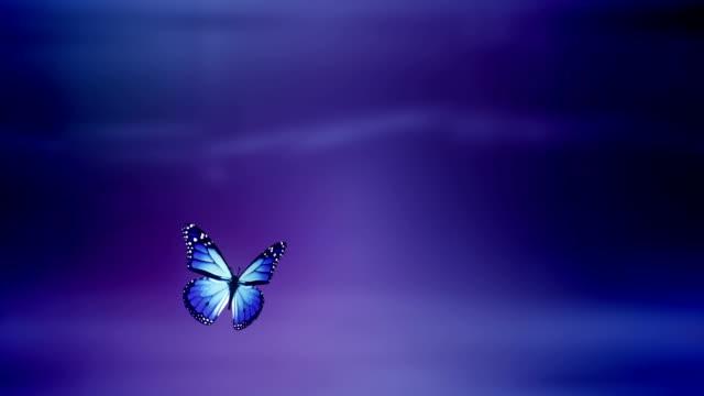 Butterfly landing with Luma / Alpha Matte (purple) - Loop