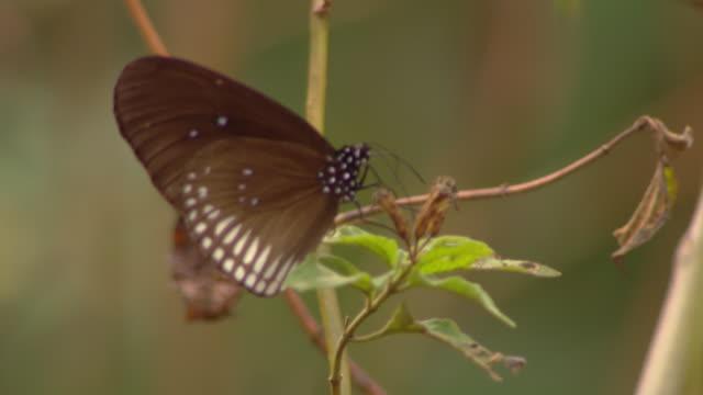 a butterfly lands on a slender stem. - gliedmaßen körperteile stock-videos und b-roll-filmmaterial