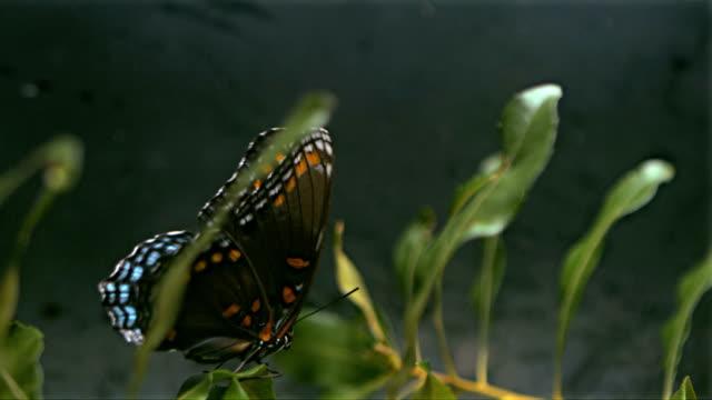 Farfalla State decollando