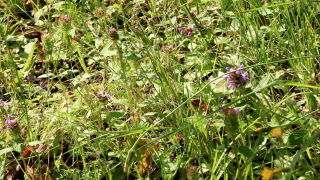 vídeos de stock, filmes e b-roll de borboletas em uma flor - grupo pequeno de animais