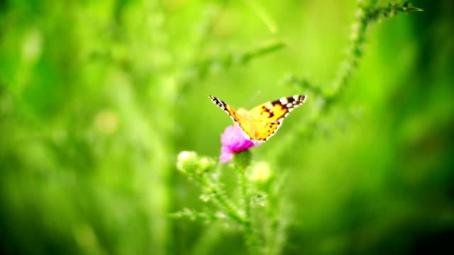 Butterfly on a flower.