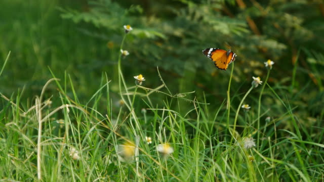butterfly on flower grass - grass stock videos & royalty-free footage