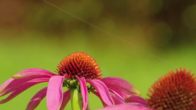 butterfly on flower - butterfly insect stock videos & royalty-free footage