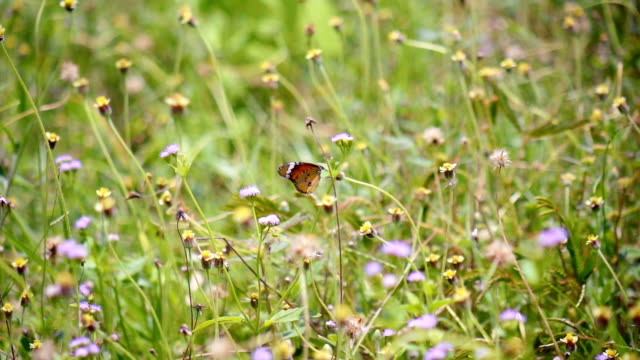 butterfly on flowers slow motion - aiuola video stock e b–roll